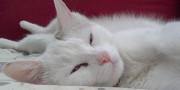 gatto_00